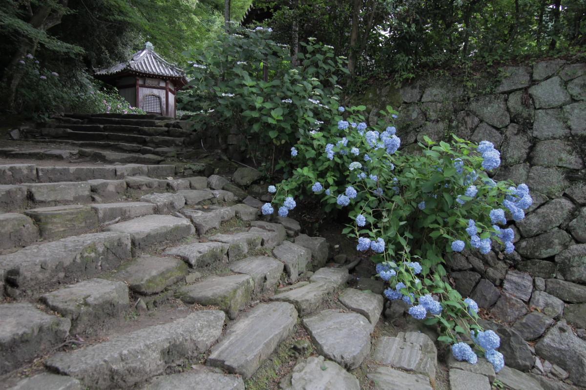紫陽花 2012 <矢田寺>_f0021869_22154884.jpg