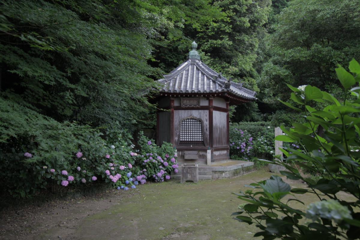 紫陽花 2012 <矢田寺>_f0021869_22183049.jpg