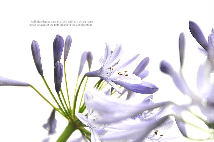 f0198771_015375.jpg