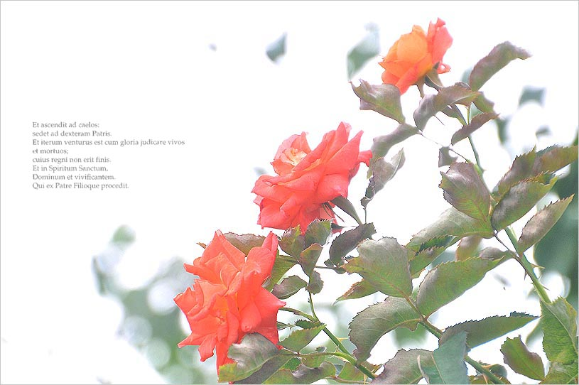 f0198771_03868.jpg