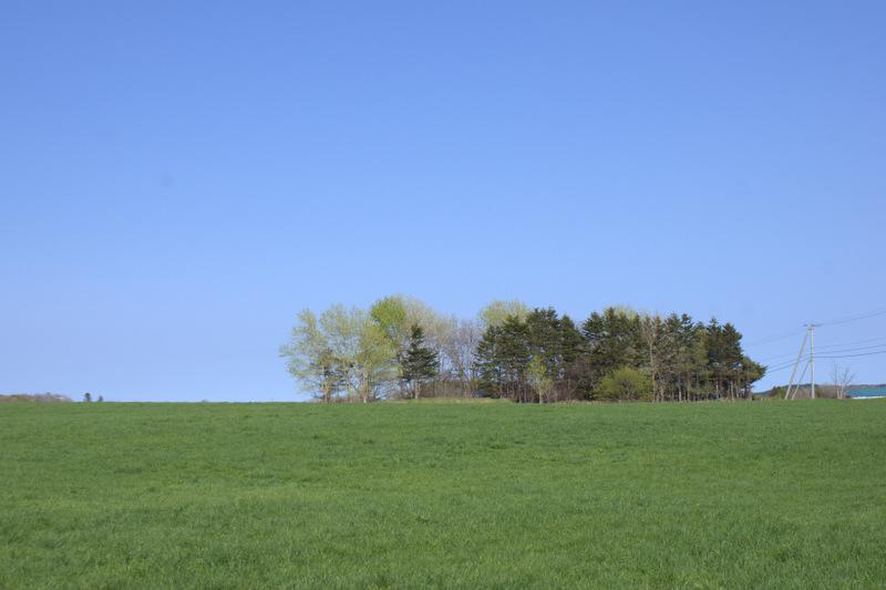 空と緑が笑ってるぅ~_e0152186_10305944.jpg