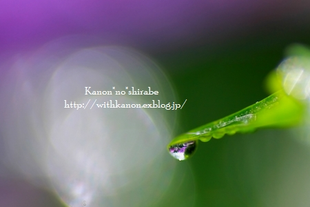 紫陽花_d0148187_0264726.jpg