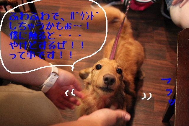 こんばんわぁ~~!!_b0130018_1592572.jpg