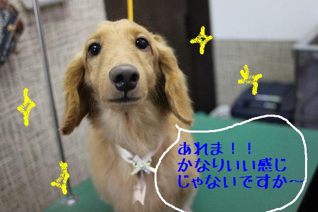 こんばんわぁ~~!!_b0130018_159852.jpg