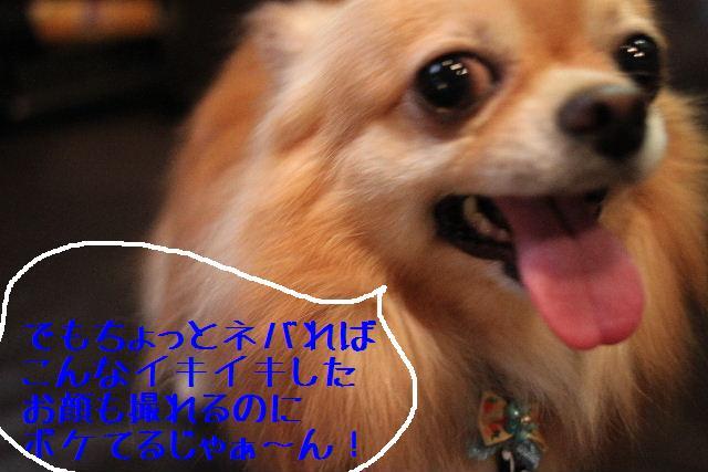 こんばんわぁ~~!!_b0130018_210291.jpg