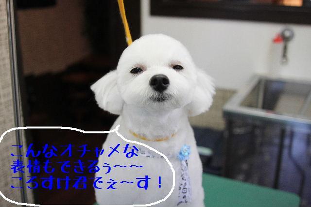 こんばんわぁ~~!!_b0130018_22551.jpg