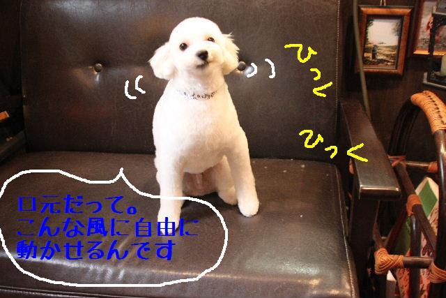 こんばんわぁ~~!!_b0130018_23265.jpg
