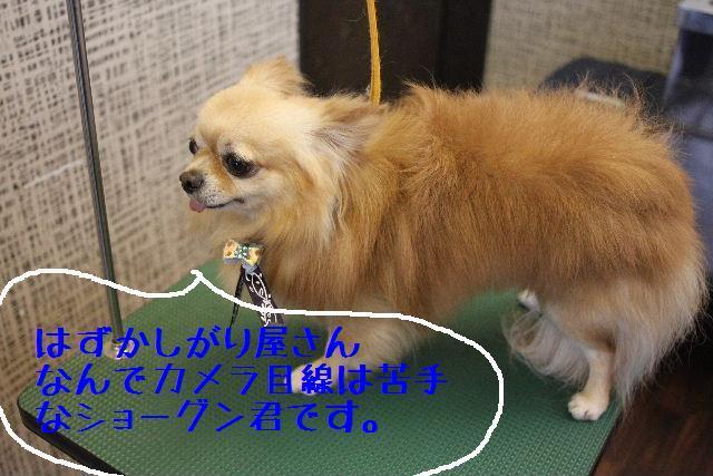 こんばんわぁ~~!!_b0130018_291298.jpg