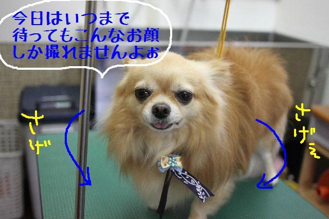こんばんわぁ~~!!_b0130018_295628.jpg