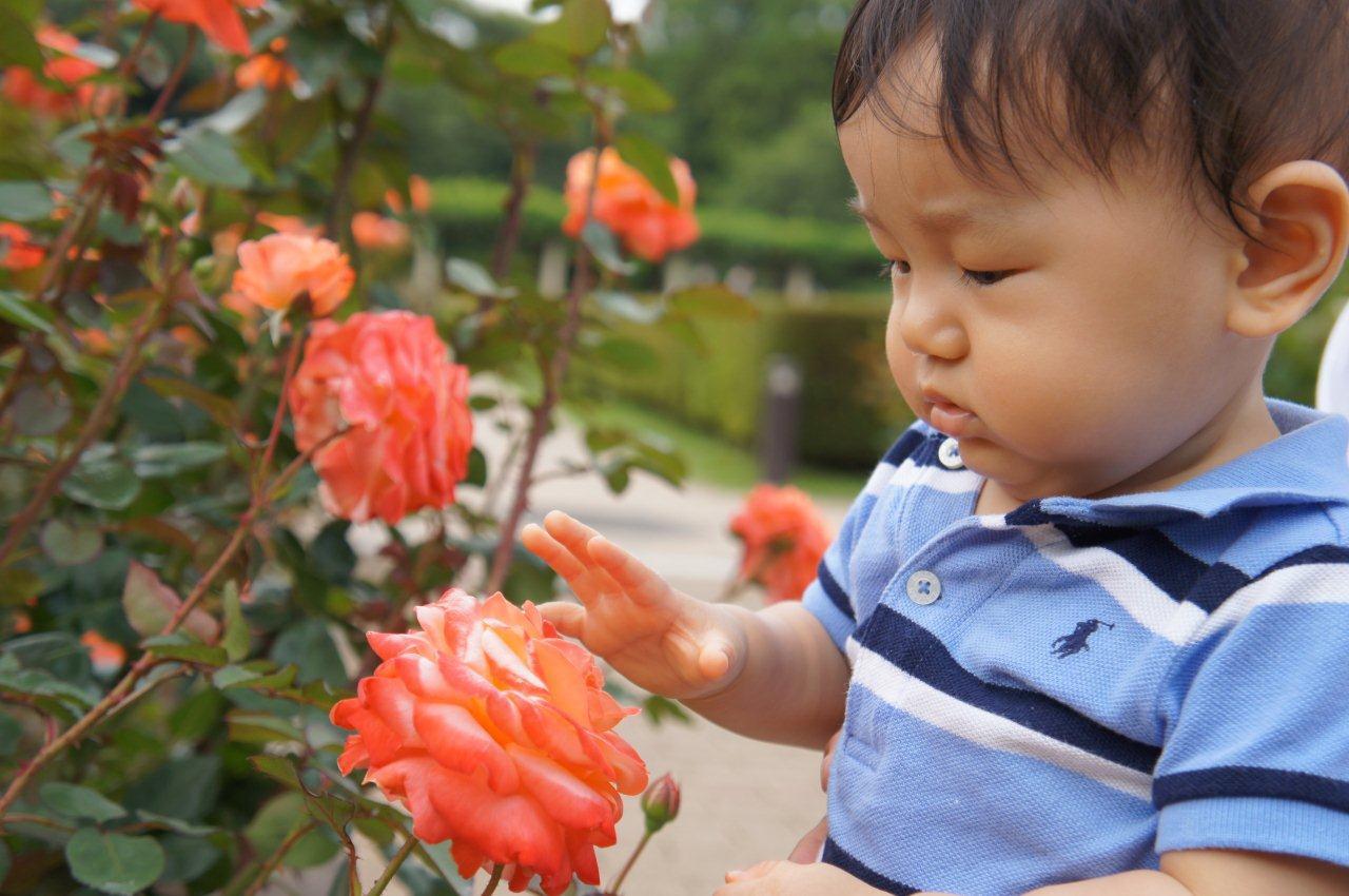 週末は植物公園へ_e0253026_11433752.jpg