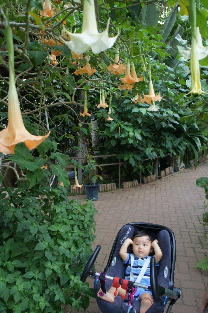 週末は植物公園へ_e0253026_11435053.jpg