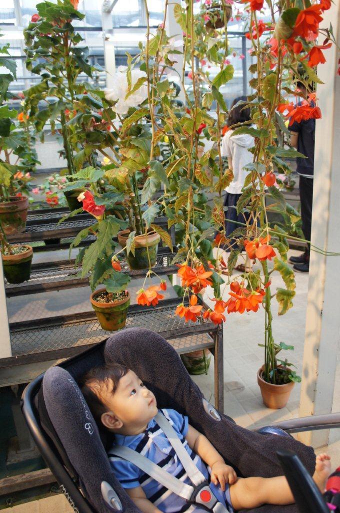 週末は植物公園へ_e0253026_11435593.jpg