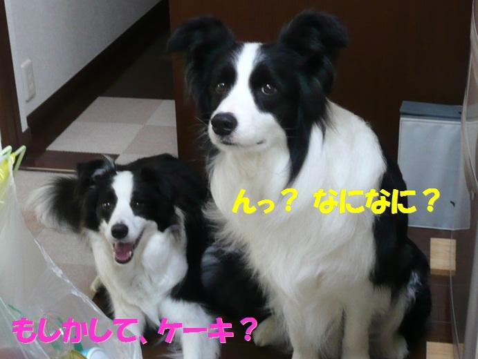 c0147241_18245352.jpg