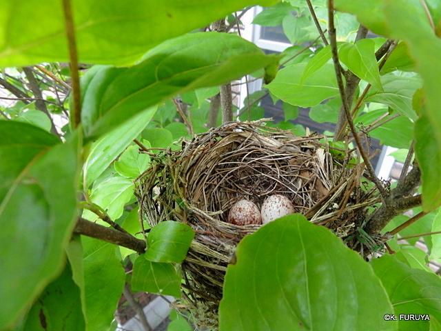 鳥の巣発見♪_a0092659_1743828.jpg