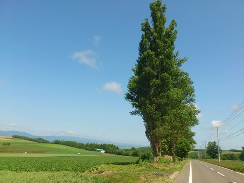 富良野の景色_b0106766_0543331.jpg