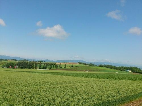 富良野の景色_b0106766_0543363.jpg
