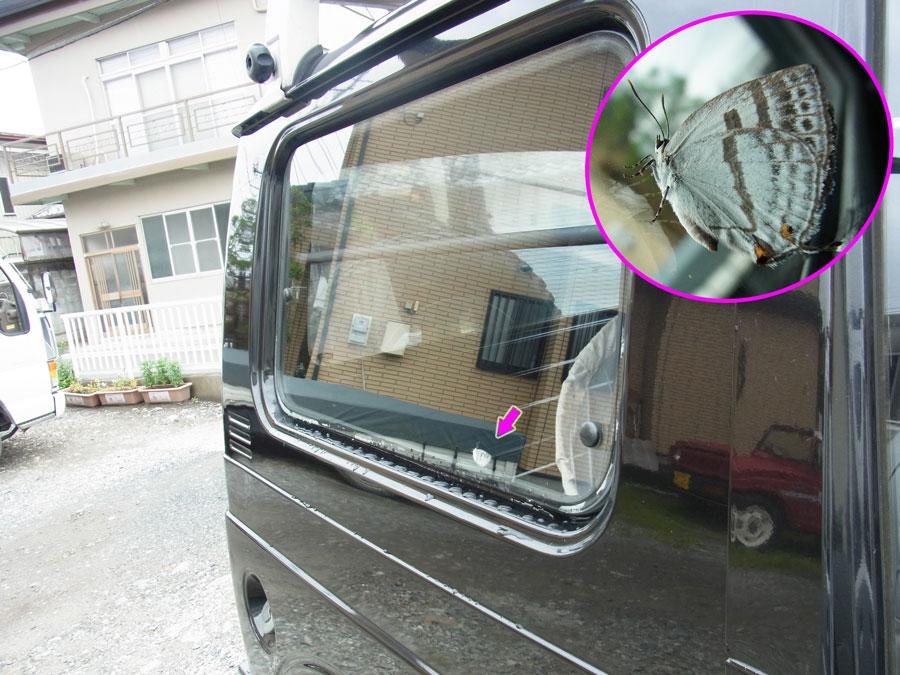 車の中にミズイロオナガ_e0253104_21403625.jpg