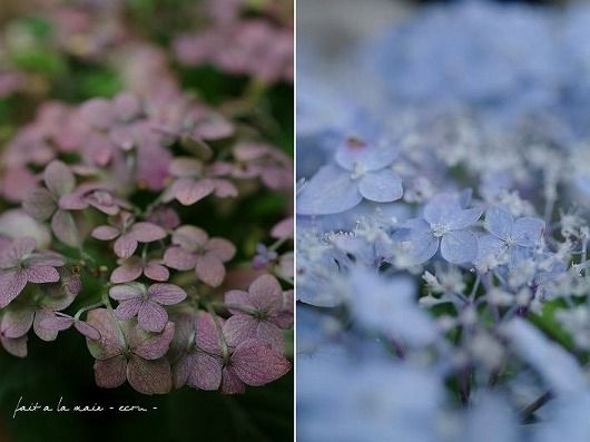 夏のお花_c0093830_196326.jpg