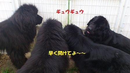 f0077931_10244460.jpg