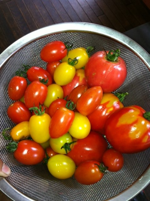 今年は4種類トマトの達・・・全種類収穫始まりました_c0222448_18164794.jpg