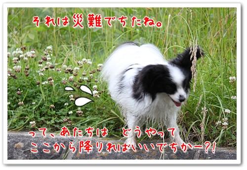 d0013149_23115188.jpg
