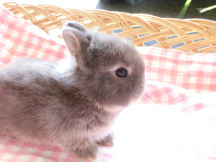 ネザー24年6月16日誕生チョコレートオター?男の子_b0073753_9473668.jpg