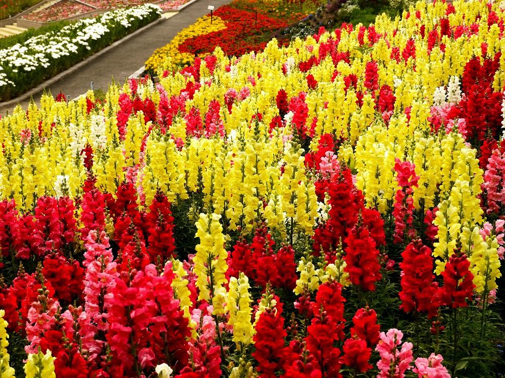 和歌山県植物公園緑花センター _b0093754_23265185.jpg