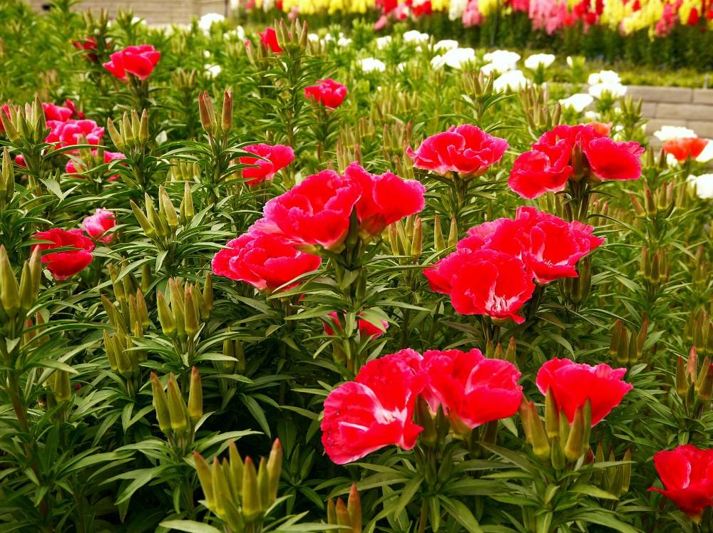 和歌山県植物公園緑花センター _b0093754_23271365.jpg