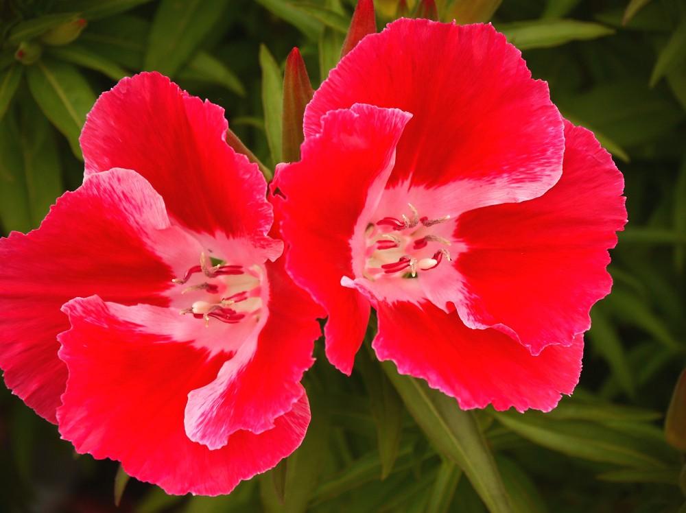 和歌山県植物公園緑花センター _b0093754_23272541.jpg