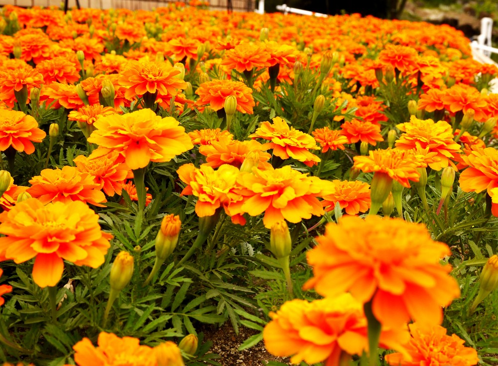 和歌山県植物公園緑花センター _b0093754_23282177.jpg