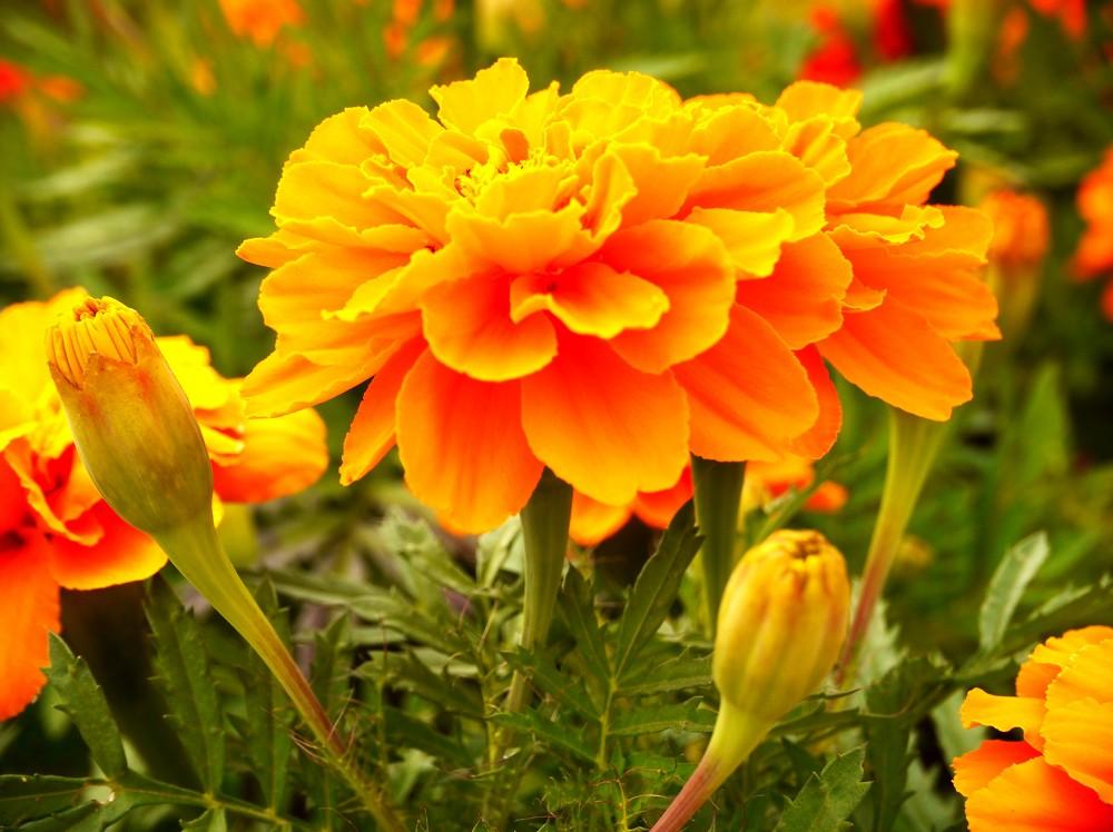 和歌山県植物公園緑花センター _b0093754_23283852.jpg
