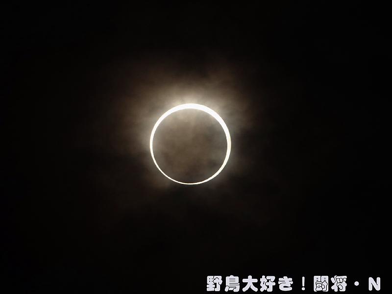 金環日食_f0059882_2015746.jpg
