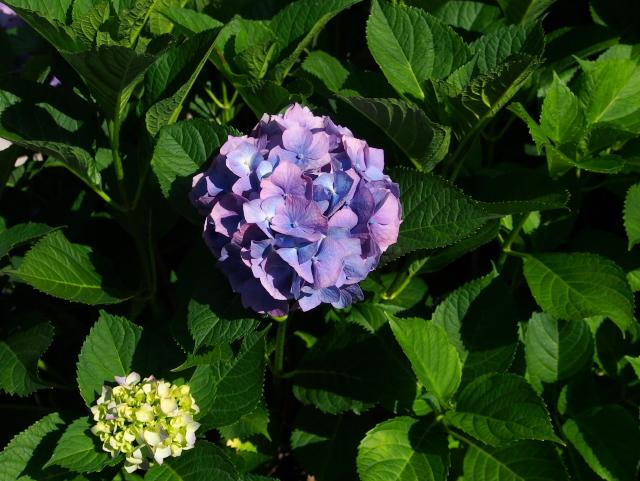 故郷の風景 庭に咲く花々_f0024992_8161216.jpg