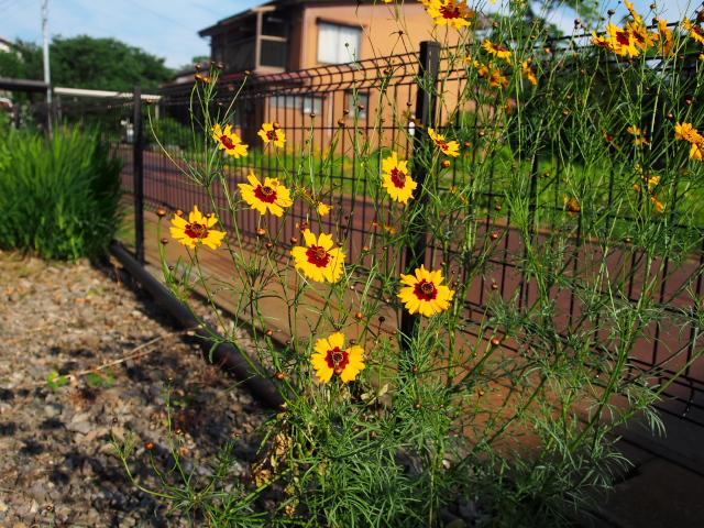 故郷の風景 庭に咲く花々_f0024992_8164626.jpg