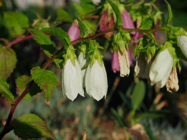 故郷の風景 庭に咲く花々_f0024992_8172259.jpg