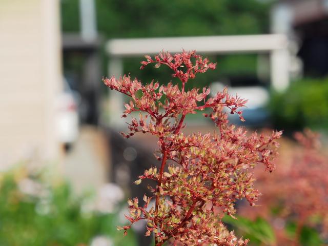 故郷の風景 庭に咲く花々_f0024992_817347.jpg