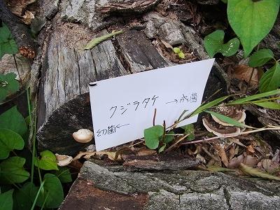 すみれば自然講座2_b0049307_1343294.jpg