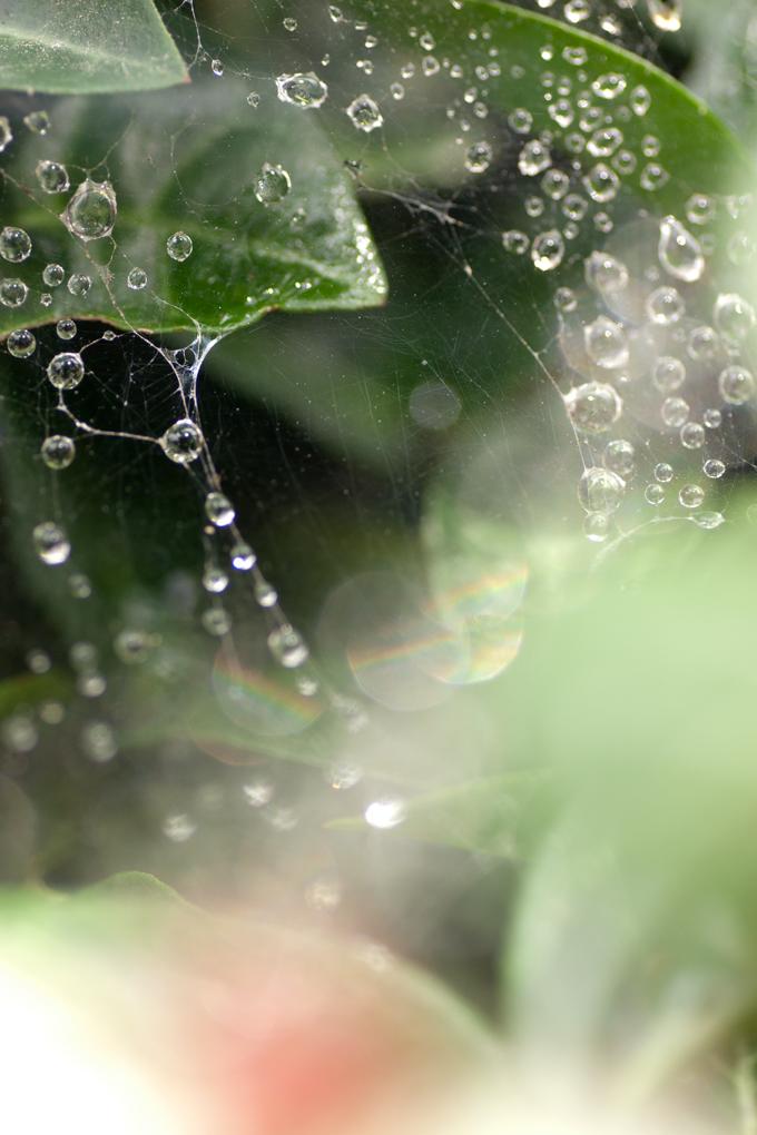 雨あがり幻想曲 #6_f0155808_21371346.jpg