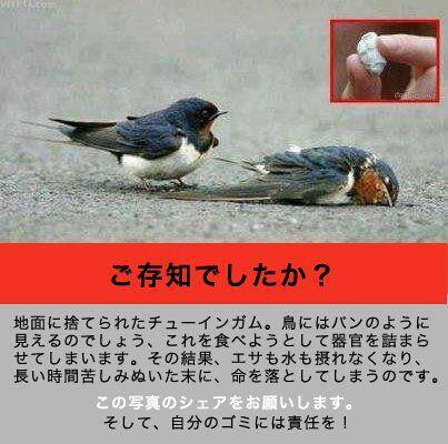 海外の「メディア」では~☆_a0125419_9105665.jpg