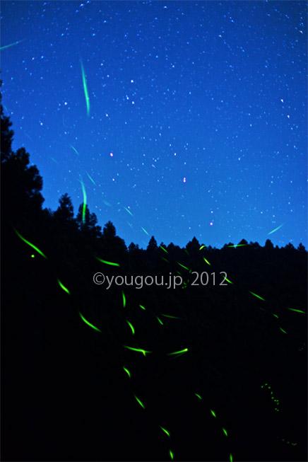 星とホタル  Star and Firefly_e0245846_18492367.jpg