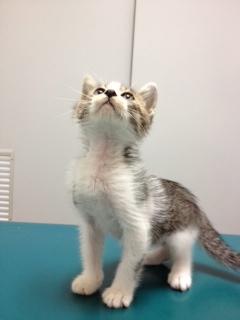 仔猫ちゃんの里親さん募集しています!_d0129766_1121582.jpg