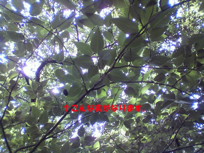 f0183484_12593851.jpg