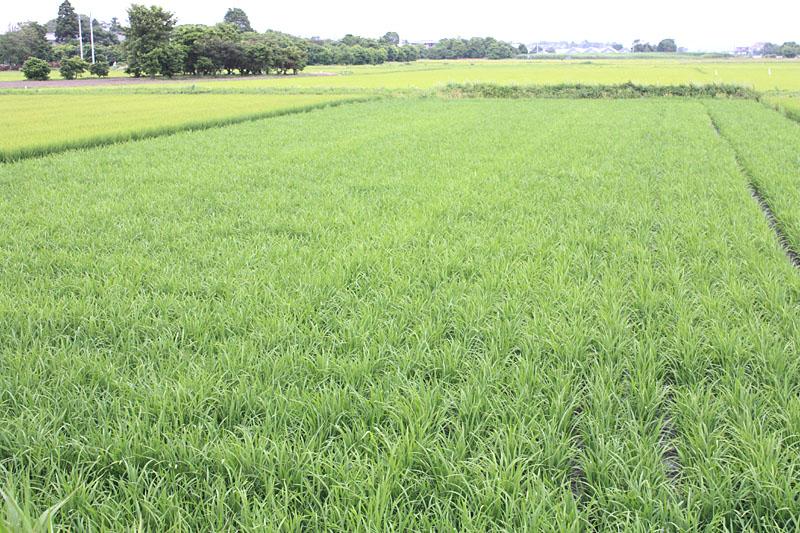 九州の大雨の被害_b0114798_172598.jpg