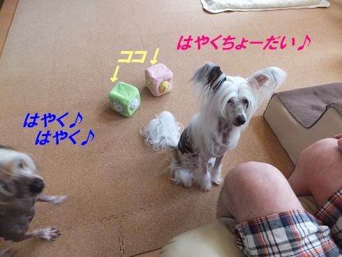 f0179203_14291879.jpg