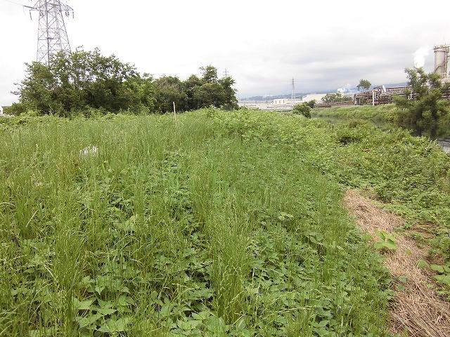 1ヶ月で伸びる夏草は強敵 滝川の土手の法面_f0141310_735047.jpg