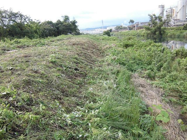 1ヶ月で伸びる夏草は強敵 滝川の土手の法面_f0141310_74423.jpg