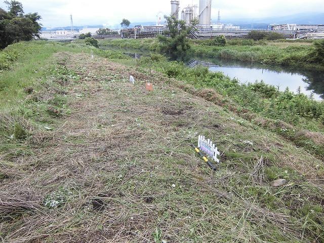 1ヶ月で伸びる夏草は強敵 滝川の土手の法面_f0141310_744826.jpg