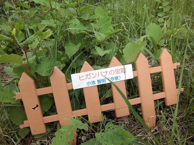 1ヶ月で伸びる夏草は強敵 滝川の土手の法面_f0141310_75945.jpg
