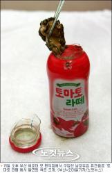 韓国アジア大会、なんたるホスト国「まさにマルディーニの怒りの再現」!?_e0171614_1949142.jpg