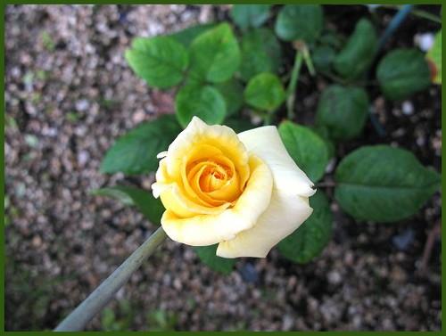 咲きそう~♪_e0072023_209525.jpg